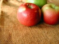 白樺アレルギーと食べ物 りんごなど果物で花粉症の症状も